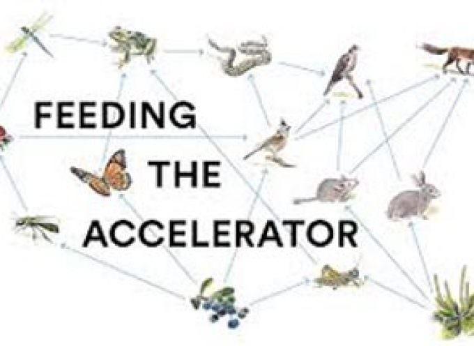 Feeding the Accelerator: Ecco  i 10 team selezionati per far parte dell'incubatore di start up
