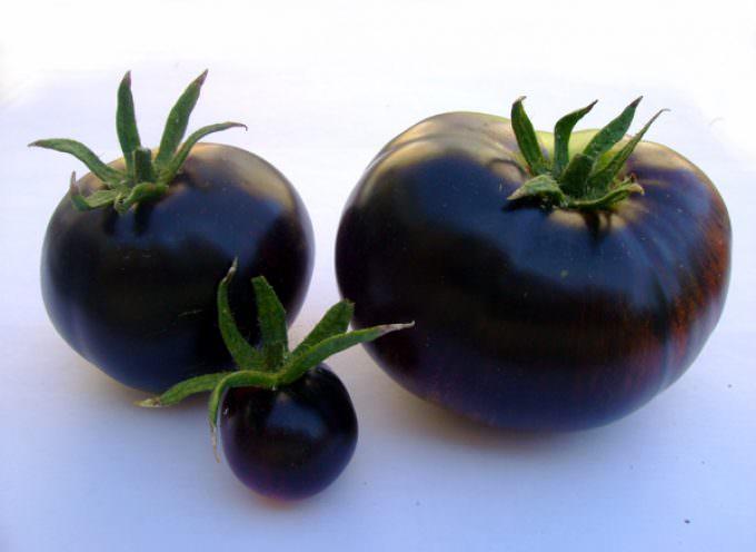 Smartfood naturale, ecosostenibilità e colture integrate: Al via a Viterbo Tuscia Food Valley