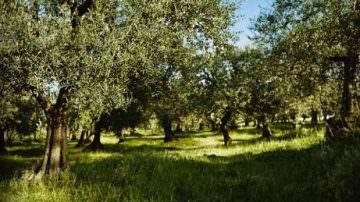 Nasce Vù, l' olio delle pendici del monte Vùlture in Basilicata