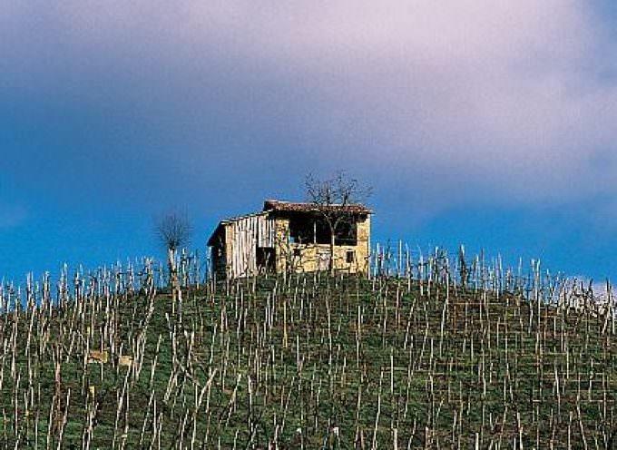 Economia Vino Italia: urge Testo Unico per vite-vino. Due proposte in Commissione
