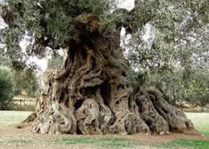 Cuore della Puglia: eccellenze di 40 Comuni uniti, a Milano