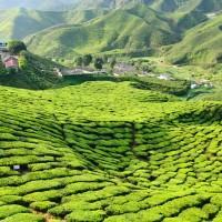 Tè verde contro la buccia d'arancia, by Chiara Manzi