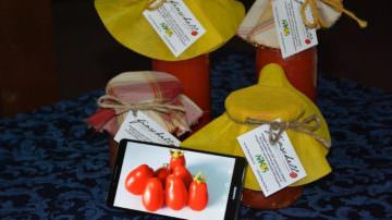 Fiaschello di Battipaglia: il pomodoro ritrovato del Cilento