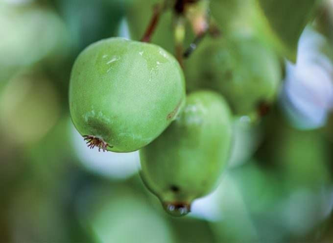 Ecco il Nergi, mini Kiwi novità pieno di Energia naturale