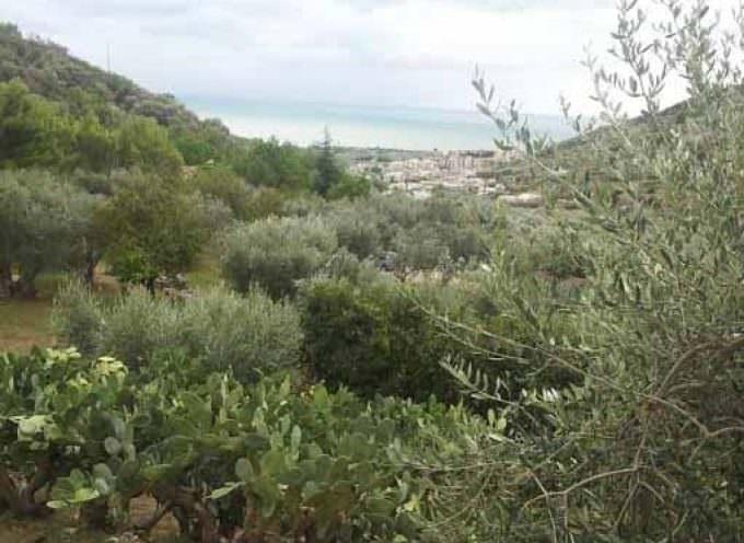 Gargano Running Week: Correre nella natura ammirando panorami mozzafiato