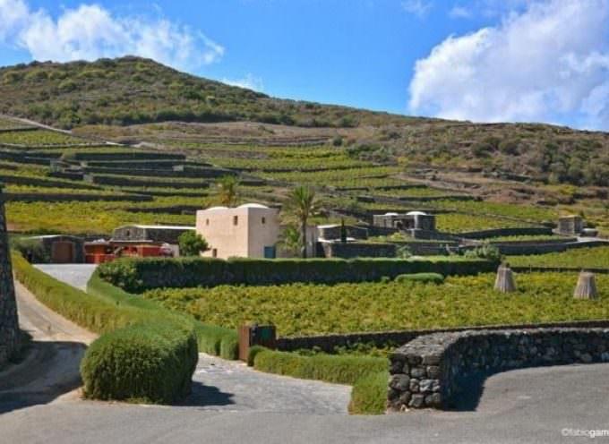 Passitaly: il valore del paesaggio di Pantelleria