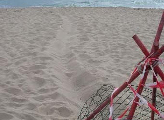 Oasi del Simeto: E' tornata a nidificare la tartaruga marina Caretta caretta