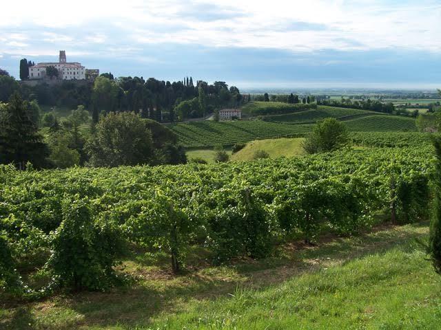 Cantina Conte Collalto trionfa al Merano Wine Festival 2015