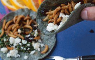 Cenone di Capodanno: menu stellato con insetti invece del solito salmone
