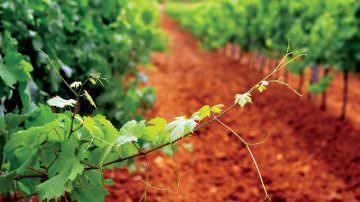 Primitivo di Manduria molto più che un vino by Luca Maroni – Elenco 36 Cantine