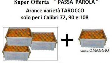 Ecommerce Arance Sicilia: inizia la raccolta della varietà TAROCCO