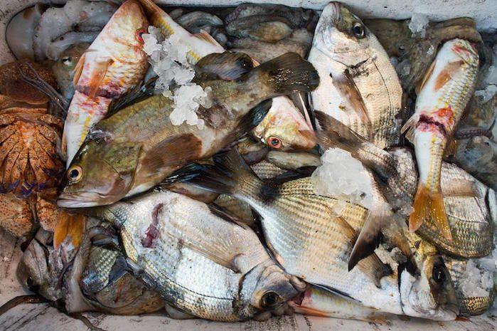 Cucinare il pesce: i consigli di Marco Di Lorenzi – Chef docente di cucina