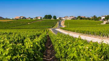 Il bullismo della UE anche contro il nome dei vitigni italiani