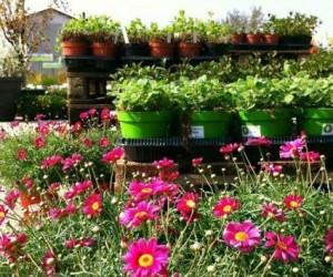 Aromantica: La festa delle erbe aromatiche a Budrio