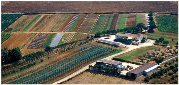 "Azienda biologica ""LaSelva"": Alimenti inalterati e ingredienti di qualità"