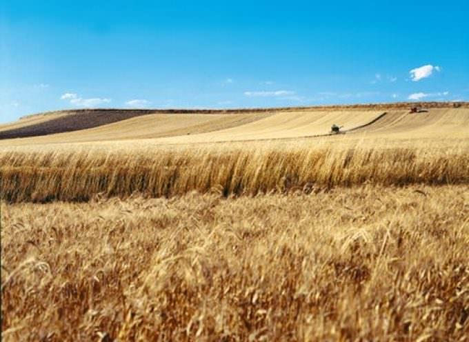 """Crisi del grano? Basterebbe un progetto """"Dedicato"""", come fa Granoro"""