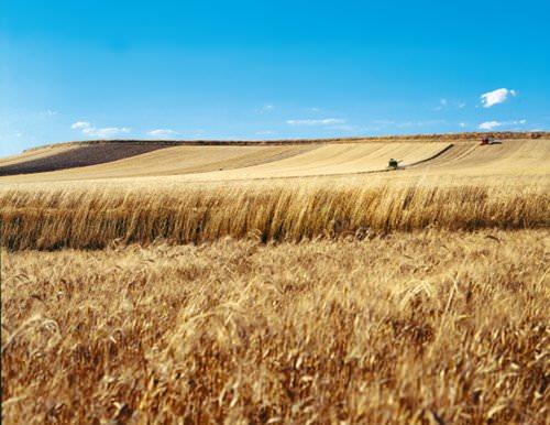 Import grano duro: il nostro non basta