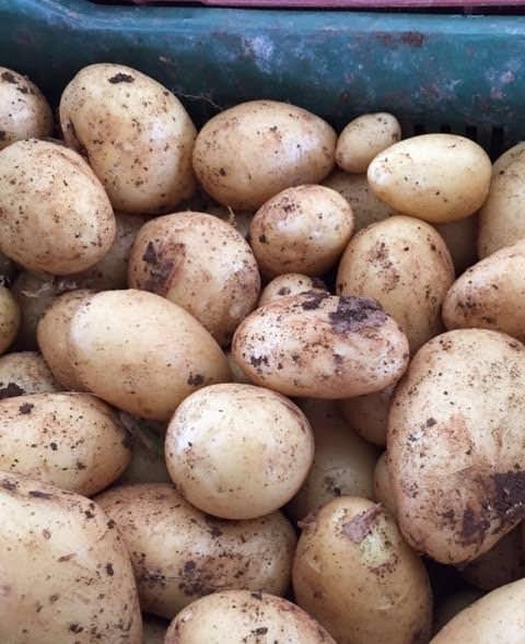 Patate novelle di Sicilia contro patate di importazione