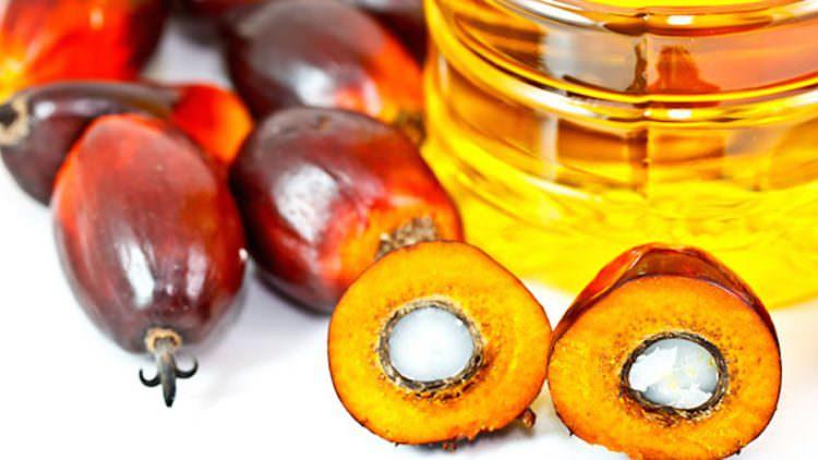 Ferrero e l'Olio di Palma: una scelta responsabile, basata sulla scienza