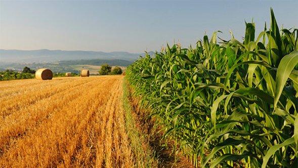Dall'AGEA boccata di ossigeno per le aziende agricole