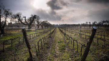 Azienda vinicola Donne Fittipaldi: Vino e Arte al 50° Vinitaly