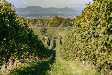 AZ. Le Morette - Zenato - le vigne