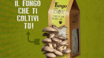 Fungo Box: Tempo di funghi… stando a casa