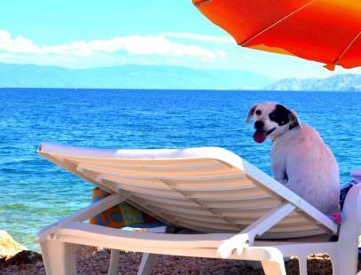 Croazia: Monty's Dog Beach and Bar – in vacanza col nostro cane – NEWSFOOD.com