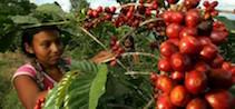 Cafe-Guatemala-864x400_c