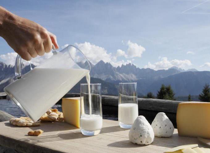 MILA: le vacche felici fanno il latte più buono