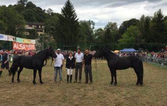 Premiati: Everest, Aigo e Delice, i cavalli di Merens di Dronero