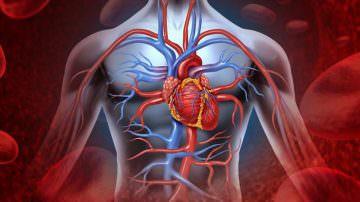 Patologie cardiovascolari: come preservare la salute del cuore