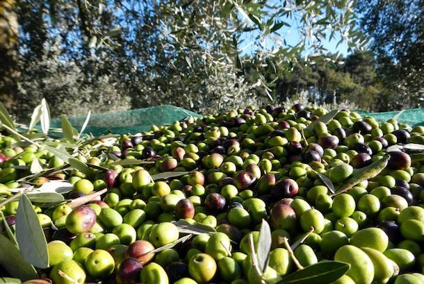 Olio extravergine d'oliva biologico: un alimento per viver sani e star bene