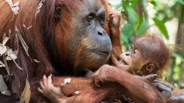 Biscottificio Di Leo Pietro a difesa delle foreste degli orangutan