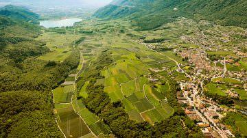 Kaltern ed Erste + Neue = Cantina Kaltern: 800 viticoltori  Kalterersee Doc