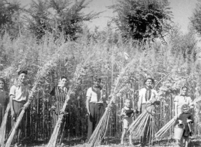 Canapa, Canna-lex: lo sdoganamento della cannabis in nome dello sviluppo sostenibile