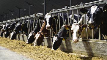 Allevamenti: uso antibiotici solo per curare, non per prevenire