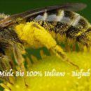 ADI: miele 100% Italiano BIO dei suoi milleseicento alveari