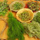 Garden Store Agri Brianza: Alessandro Magagnini e i segreti delle erbe aromatiche