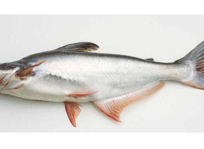 Carrefour Italia blocca la vendita del pesce Pangasio