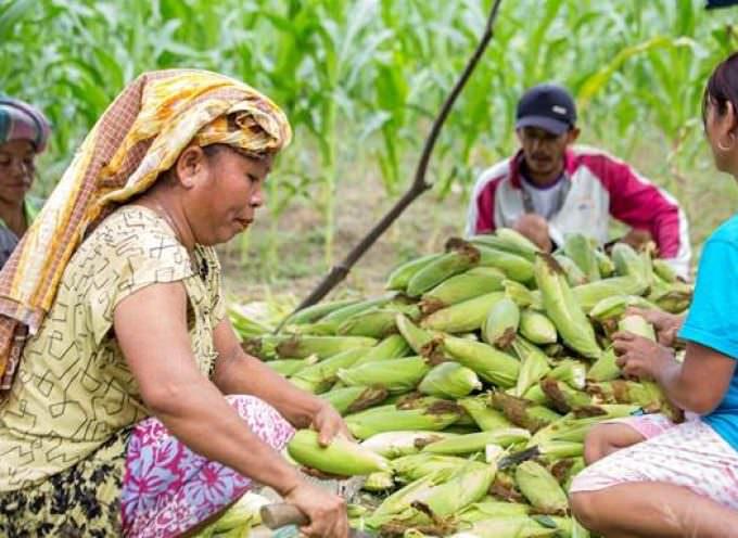 Giornata Internazionale della Terra: Il programma agroforestale di Asia Pulp & Paper