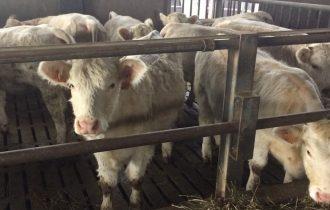 Mootral win win win win: meno 30% emissione metano dei bovini