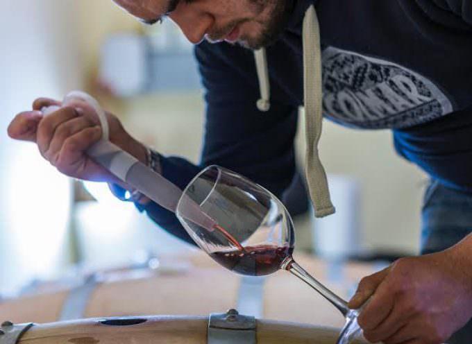 Azienda Torre Ospina: Incontro con Quintino Manco, viticoltore di Racale, in Salento