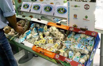 L'Aglio Bianco Polesano DOP al Macfrut di Rimini