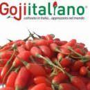 Rosario Previtera: venite a scoprire le grandi novità del Goji Italiano a Tuttofood