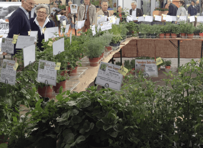 Milano: Mostra-mercato di piante aromatiche a Piazza Portello