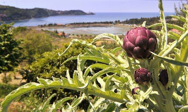 Portorose: Un approdo sicuro per degustare le eccellenze della cucina istriana