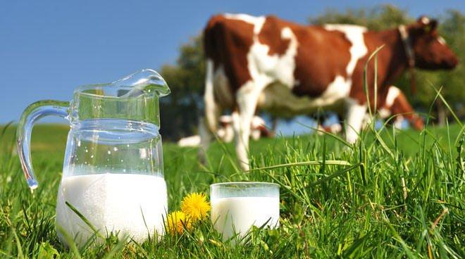 """Il latte """"esiste"""" sin dal 1929! E si può solo mungerlo!"""