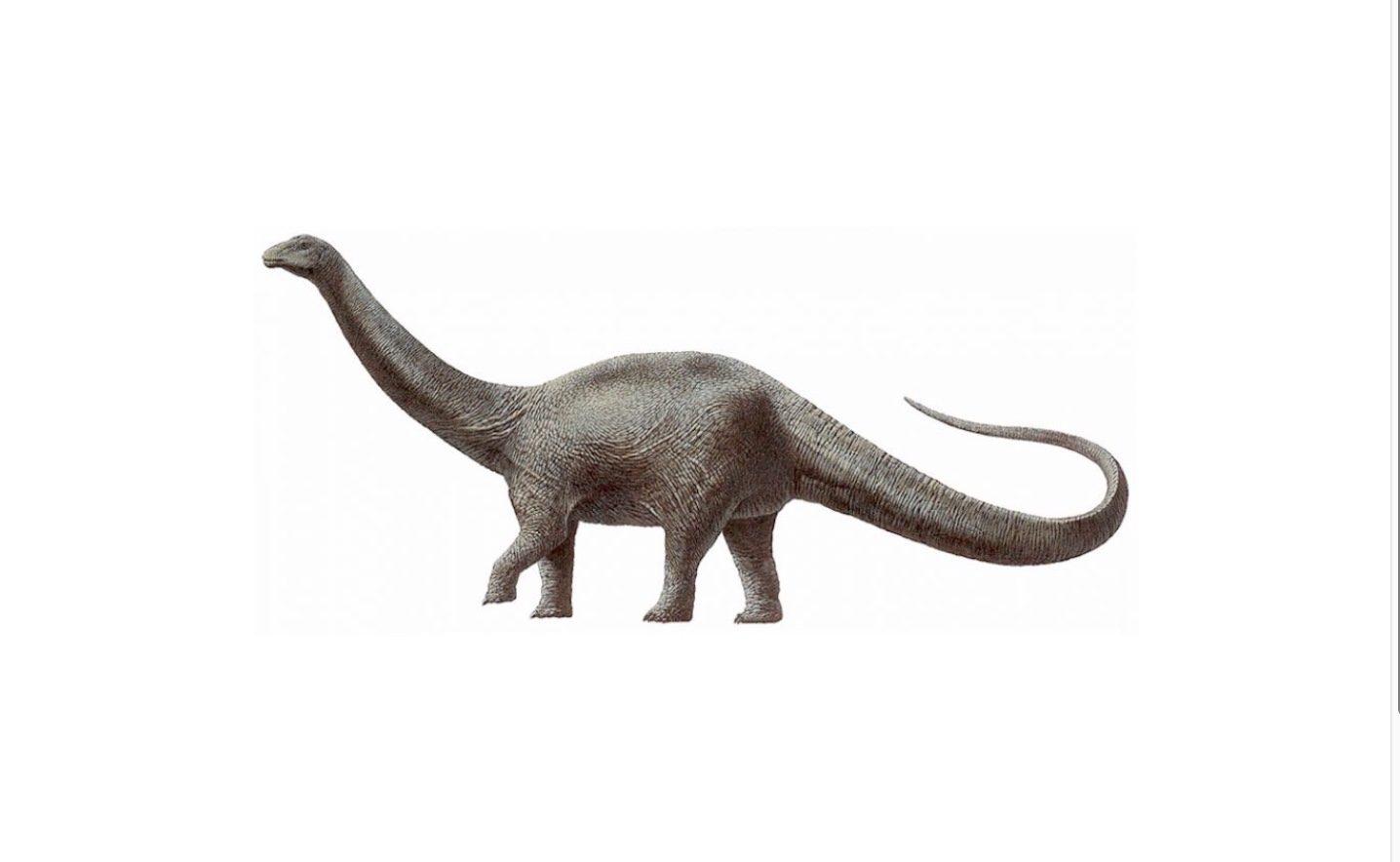 Boscosauro di Altamura, Tenuta Sabini: sono ricomparsi i dinosauri