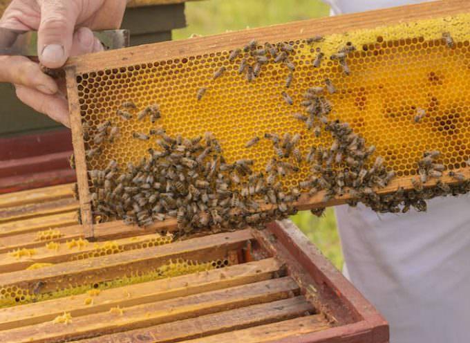 Miele Italiano Bio, più buono e più sicuro, naturale dal produttore, è meglio
